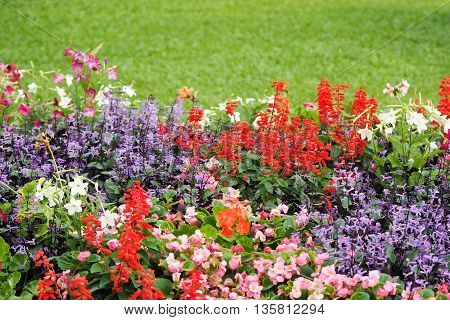 Perspective defocus colorful flowers (red purple violet green pink) with green grass in garden. Natural fresh concept.