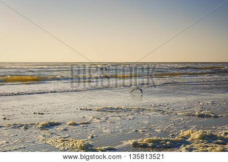 Sea foam on the beach of the North Sea during sunset.
