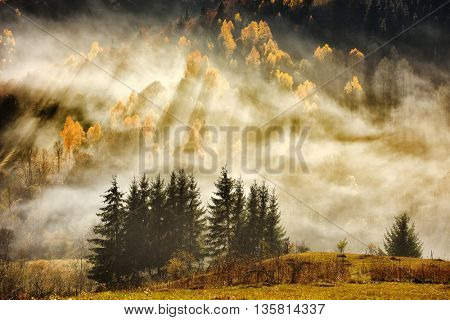 autumn landscape on foggy morning