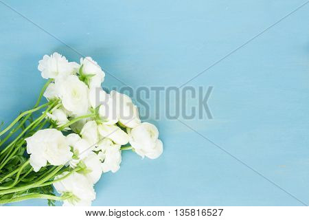 White ranunculus flowers on blue wooden background