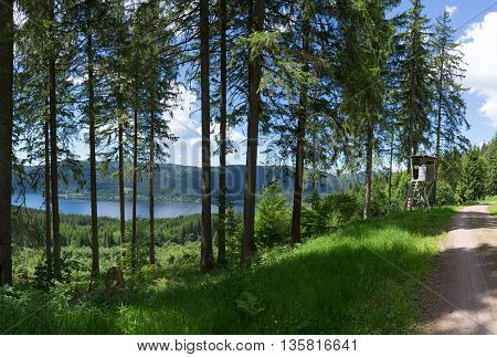 Black Forest, Germany in the summer overlooking the lake Schluchsee - taken from the hiking path Jaegersteig