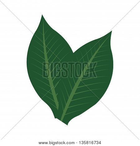 flat design green tropical leaves vector illustration
