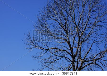 Shadow tree branch expand in blue sky