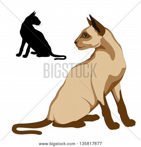 Siamese cat sits realistic vector illustration black silhouette set