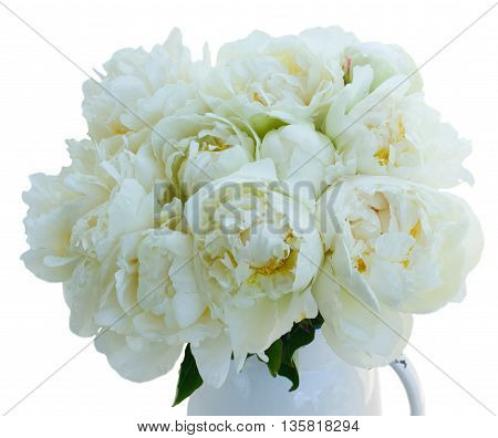 White peony flowers bunch close up isolated on white background