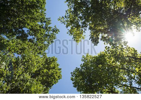Sunlight and blue sky through the spring green leaves