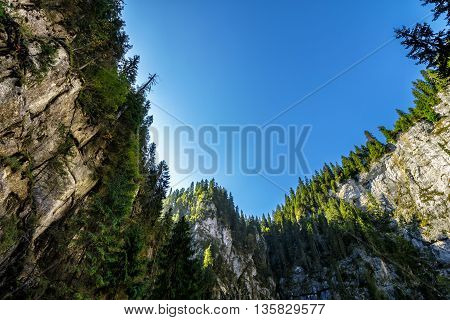 Canyon in romanian mountains with spruce forest on top