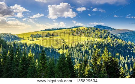 Coniferous Forest On The Hill