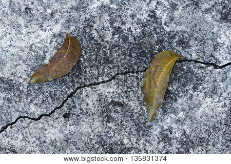Dry leaf on crack concrete wall texture. Crack concrete background.