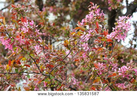 Spring Time tree flower blossoms showing beautiful color