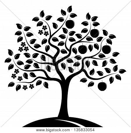 vector apple tree in two seasons isolated on white background