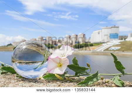 The concept of summer city. Still life with crystal ball and bindweed.