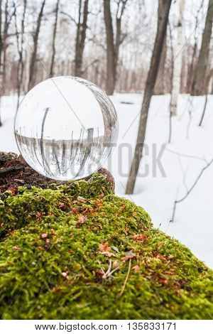 Environment concept. Crystal ball lies in the woods on moss.