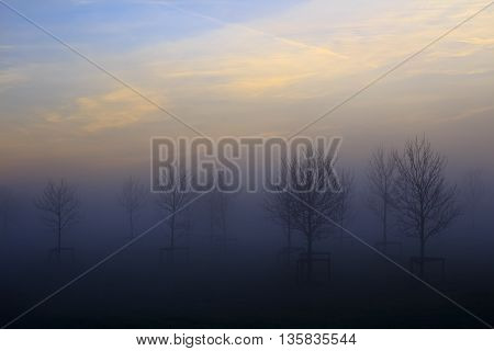 Misty tree scenery during sunrise in The Netherlands