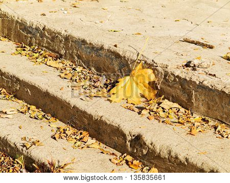 Yellow Leaves On The Granite Steps Of City Park