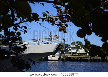 Two pelicans perched on a boat in Tarpon Springs, Florida.
