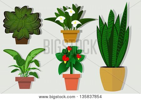 House plants and flowers in pots. Flat style vector illustration. The selection of plants for offices and residential premises
