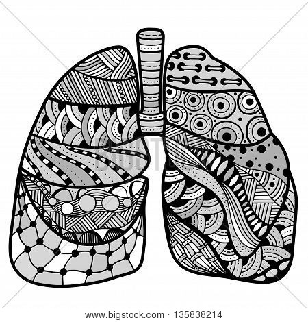 Hand drawn sketched lungs in Zentangle style on white paper background. Vector illustration.