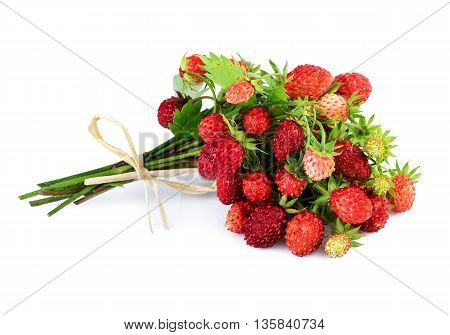 Bundle of wild strawberries isolated on white.