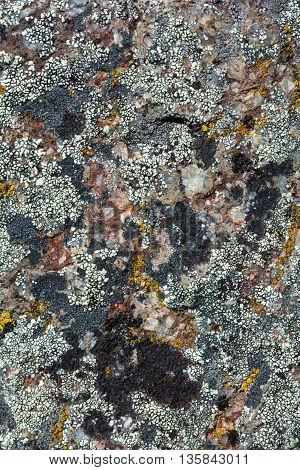 A granite rock is covered in several colors of lichen.