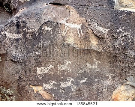 Petroglyphs on a boulder in Rio Grande del Norte National Monument