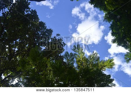 Combination of trees and sky in one image