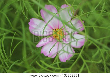Small pink and white flower surrounded by green brush