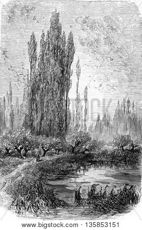 The Isle of Episy in Seine-et-Marne, Ile-de-France, France. From Chemin des Ecoliers, vintage engraving, 1876.