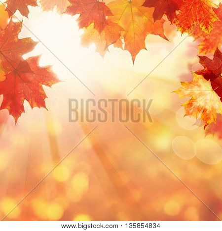 Nature Background with Autumn Maple Leaves and Sun Light