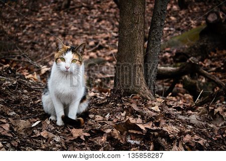 Three Color Cat Wandering At Central Park, New York
