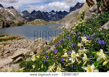 Alpine Wildflowers (Columbine) and Mistake Lake.  The Wind River Range, Rocky Mountains, Wyoming
