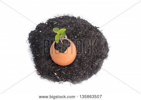 Young plant growing in egg shell tree Isolated on white background select focus tree. ( You can paint on there's egg )