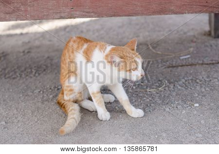 Cat Playing Outside.