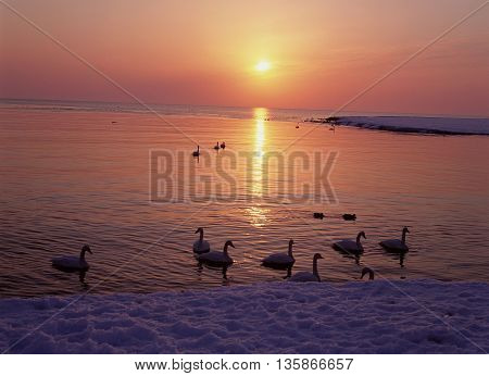 background holiday Time Life Bird  water wile love  people Sunset evening sunlight happiness mallard