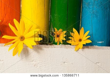 Photo of yellow flowers growing through a pencil bridge