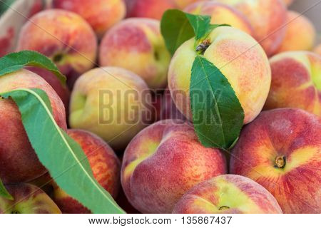 Large juicy peaches background. Peach fruit with a velvety skin. Useful dietary and vegetarian food. The gifts of nature vitamin. Peaches are delicate and fresh.