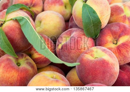 Large juicy peaches. Background from peach fruit with a velvety skin. Useful dietary and vegetarian food. The gifts of nature vitamin. Peaches are delicate and fresh.