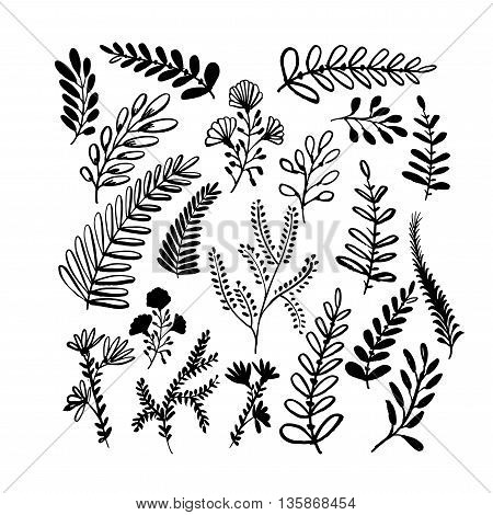 Collection of hand drawn branch. Hand drawn nature elements. Plants and flowers. Ink illustration. Isolated on white background. Hand drawn natural elements.