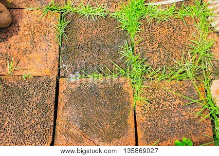 Grunge Orange Brick Block With Grass Growth Between Cleft Of Brick Block