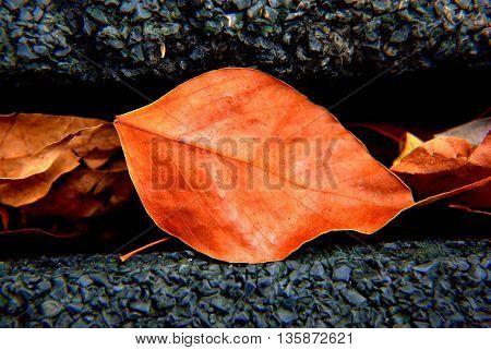 leaf in close up composition on a dark backround