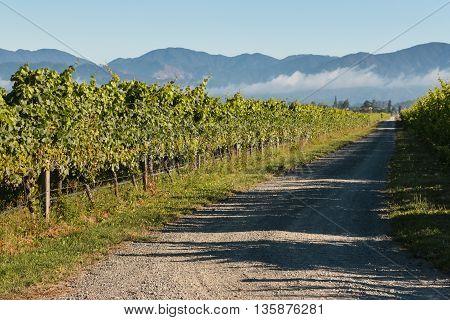 country road across vineyard in New Zealand