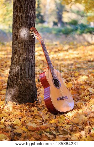 Beautiful guitar standing in the sunlight near the trunk on fallen leaves in autumn park.