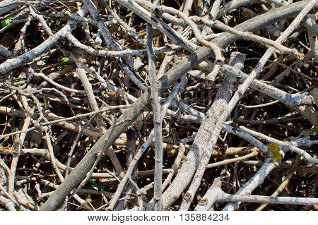 dry branches texture, close up shot abstraction