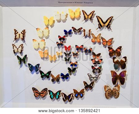 Pyatigorsk, Russia - 3 March, Collection of butterflies Central and South America, 3 March, 2016. Resort zone Mineral Waters, Krasnodar region. Insect Museum.