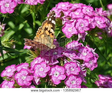 view of colorful butterfly and purple flowers bloomed