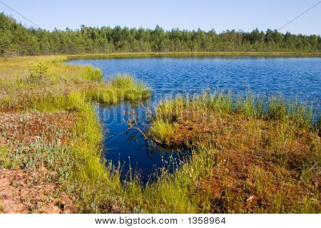 Coast Of Small Lake