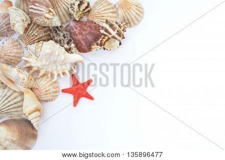 shells and starfish on white paper mix