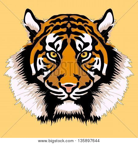 adult tiger head face realistic vector illustration