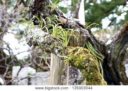 Kangaroo Fern and White Coral Fungi with moss