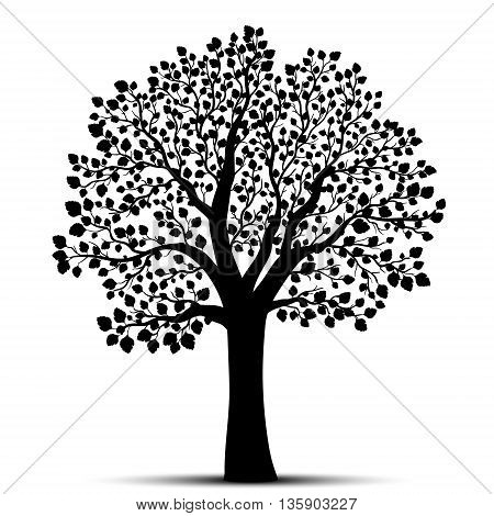 Tree silhouette on a white background vector